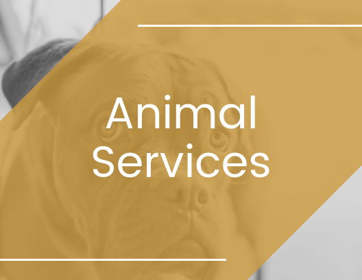 Marketing strategies for animal services